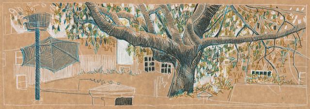 Tree on Bellevue Terrace - Great Malvern