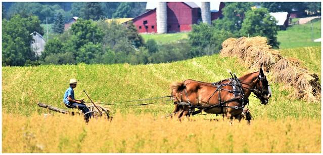 Amish Countryside @ Berlin, Ohio