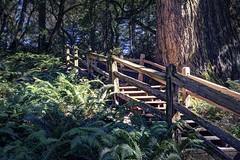 Stairway to Methuselah