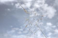 Tall Grass 9844