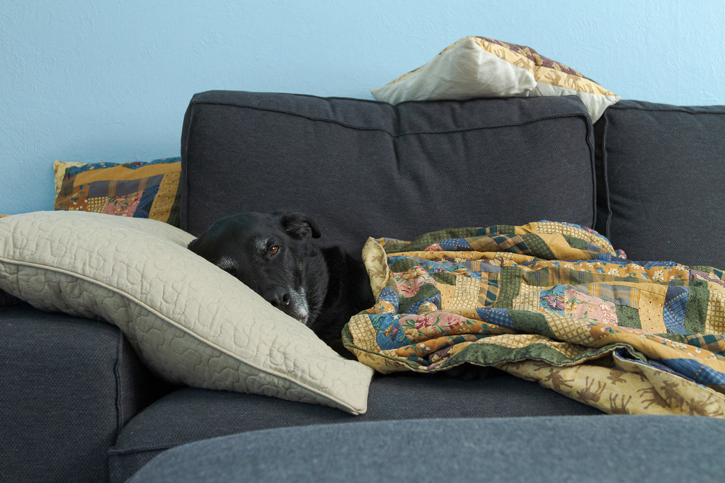 Our dog Ellie resting on our Ikea Kivik loveseat with her head on a pillow and covered in a blanket in August 2012