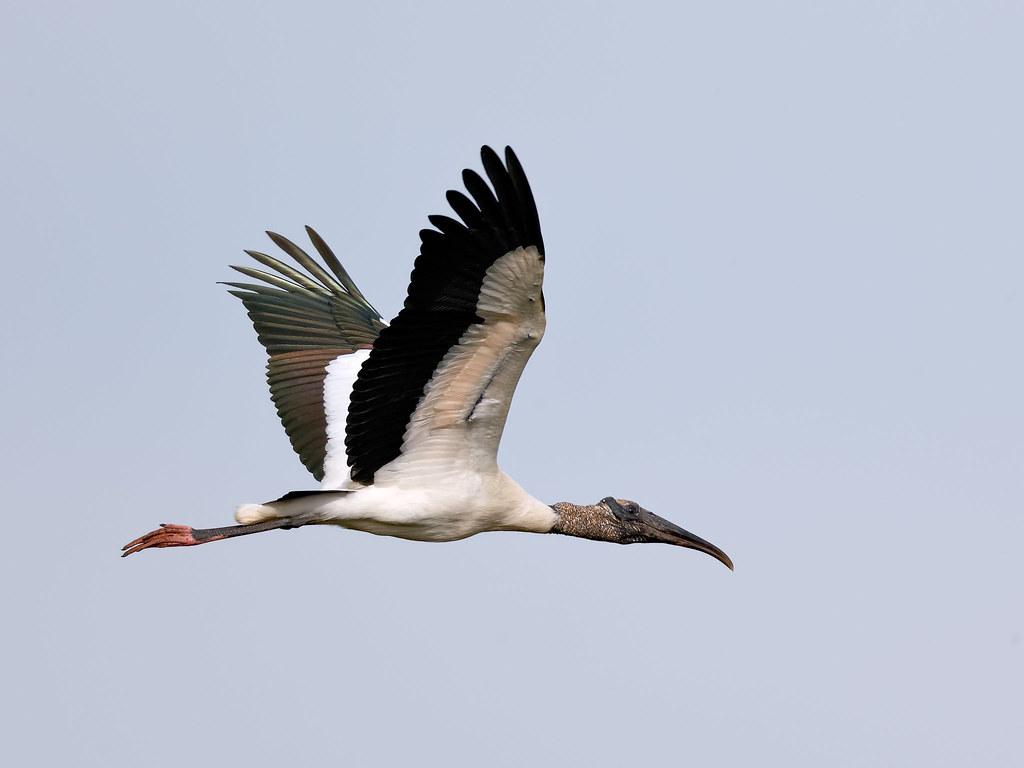 Pantanal_4499