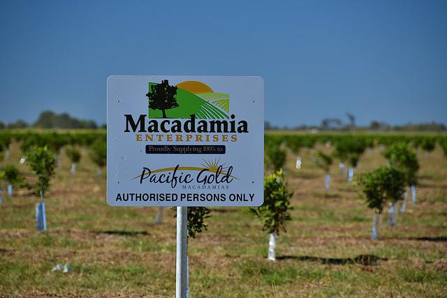 Queensland nuts [macadamia nuts]