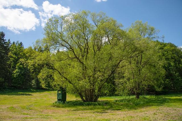 Wald / Tree