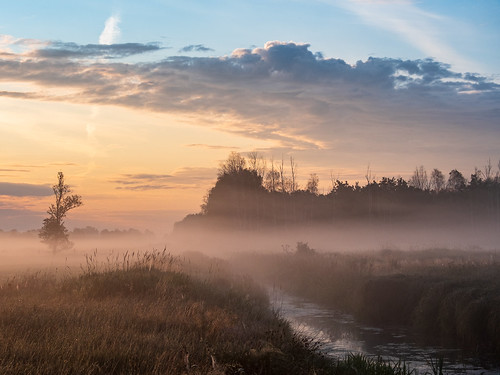 landscape nature poland mazovia summer morning sunrise dawn tree trees forest meadow stream water clouds fog mist