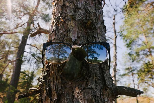 Eyes on tree