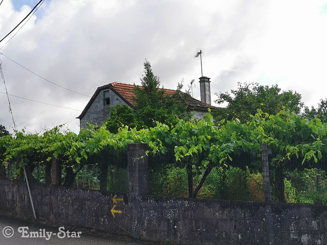 Camino Portugues - Tag 10-102758