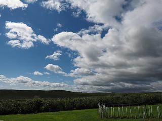 Inland clouds