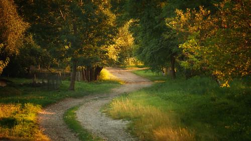 light ukraine summer green evening rural countryside village m42 vintage manual retrolens analogue
