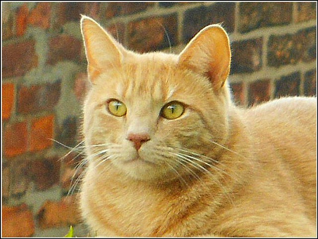 Bird Watching Cat ..