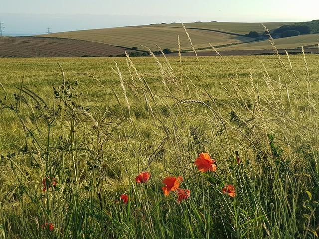Bincombe Bumps - South Dorset Ridgeway