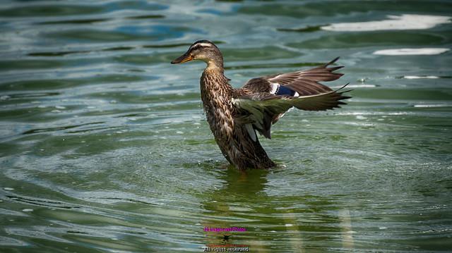 Just having a quack bath !