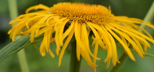 west flower macro scotland nikon 40mm mirco afs livingston lothian dx craigshill d7200 f28 nikonflickraward