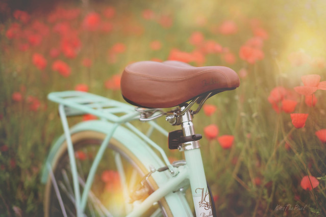 Poppy Meadow...
