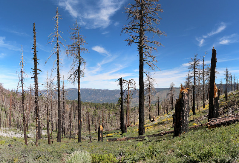 Looking north on the South Fork Trail with burnt dead trees in the foreground