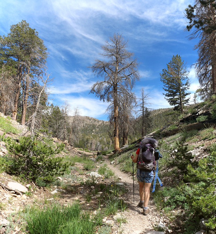 The final stretch of the Dry Lake Trail as we near Dry Lake itself
