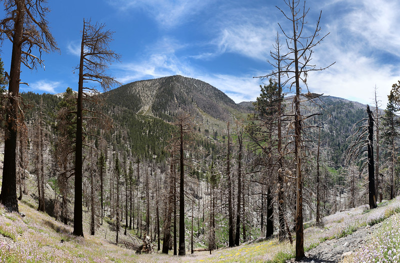 Panorama shot looking west toward Charlton Peak
