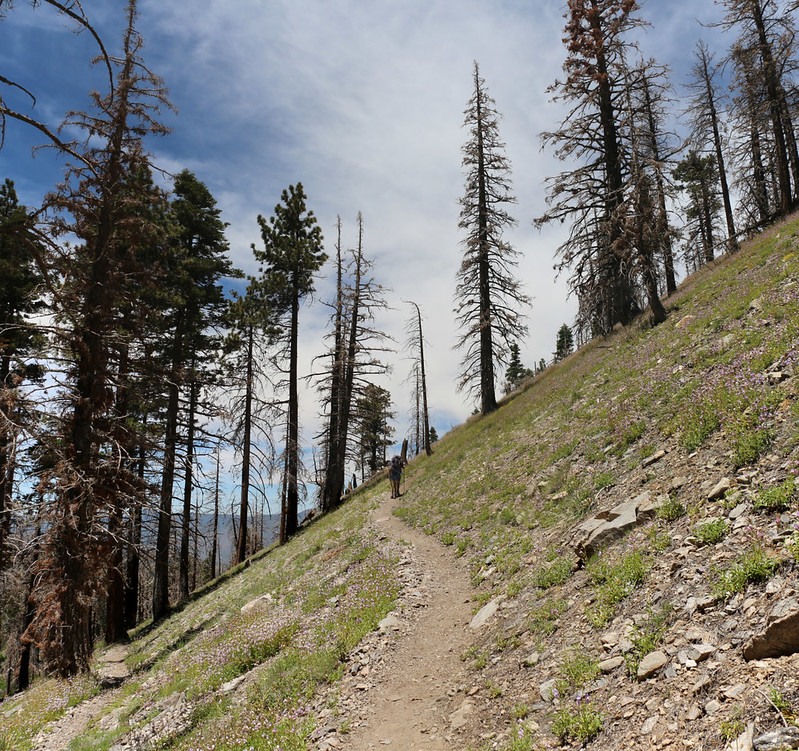 After crossing the river, the Dry Lake Trail ascends via switchbacks on its way to the lake