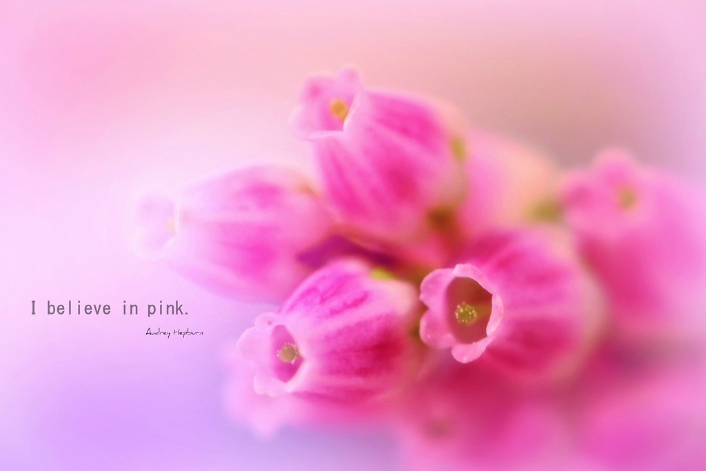 I believe in Pink . . .