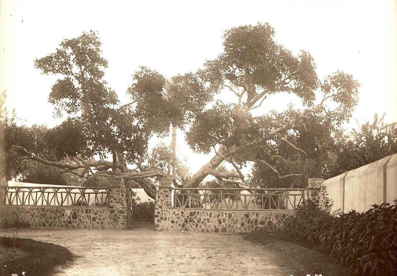 18. Египет. Каир. Дерево Богоматери