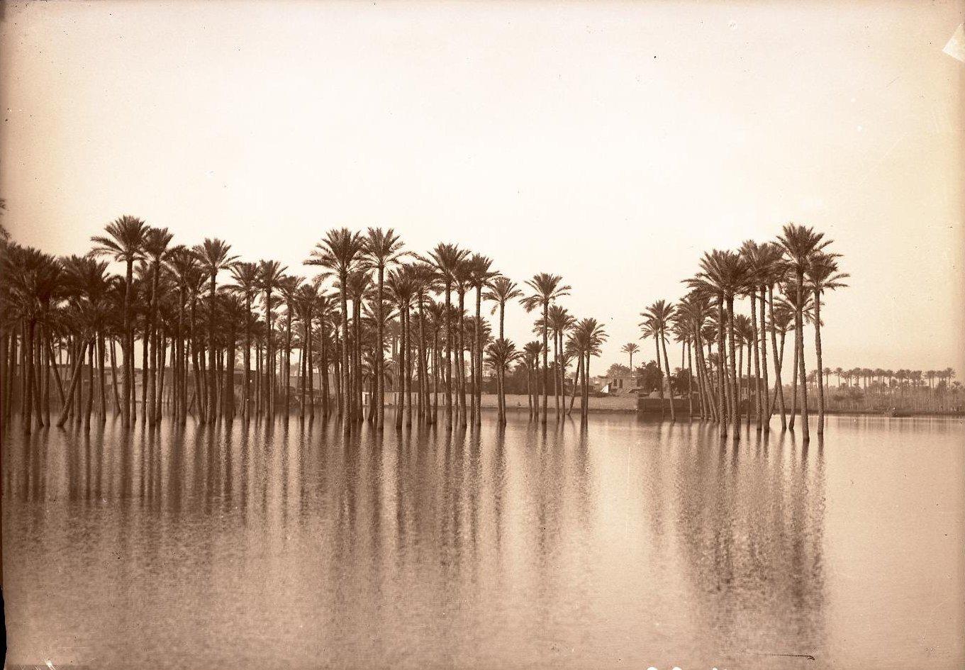 14. Египет. Каир. Разлив Нила