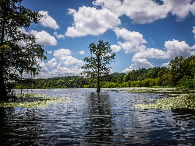 Lake Marion - Ferguson-153