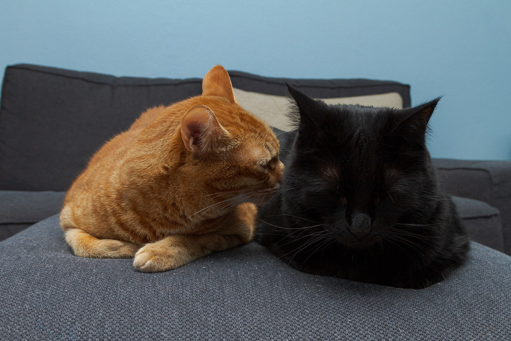 Our cat Sam sniffs our cat Emma as they slept on the ottoman of my couch in October 2012