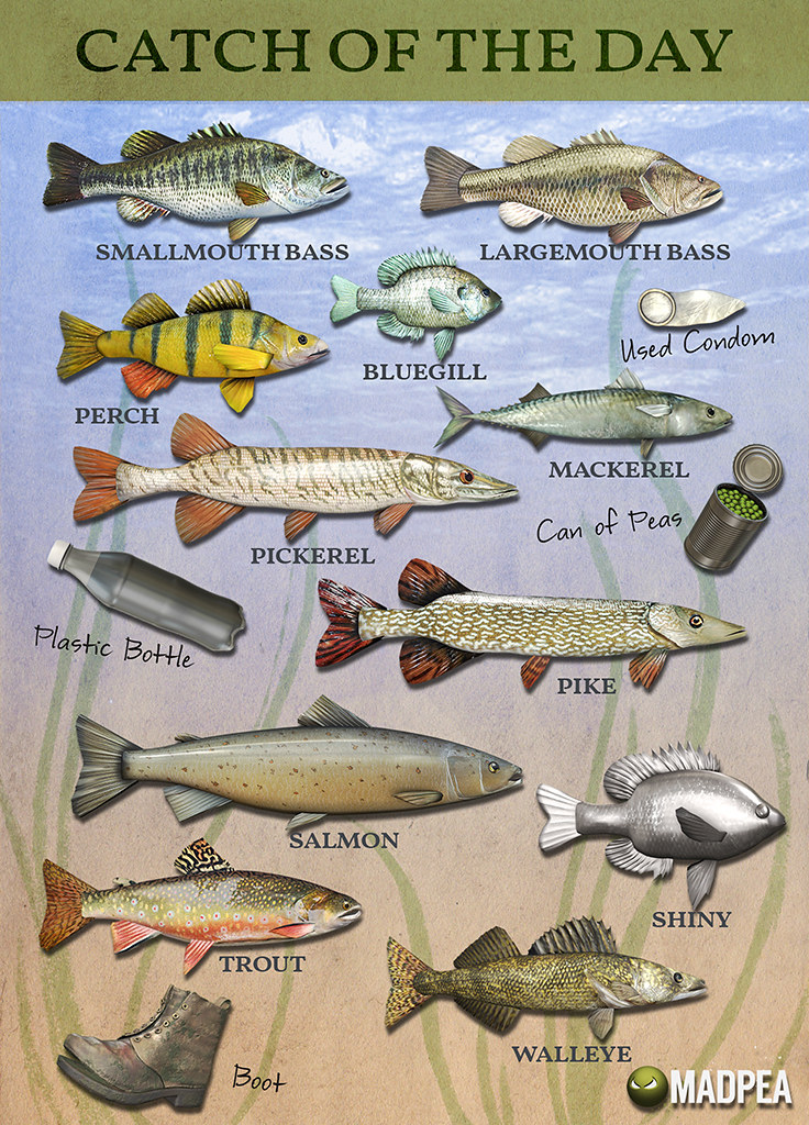 Mad Summer '19 Fishing Tournament – Fish Chart!