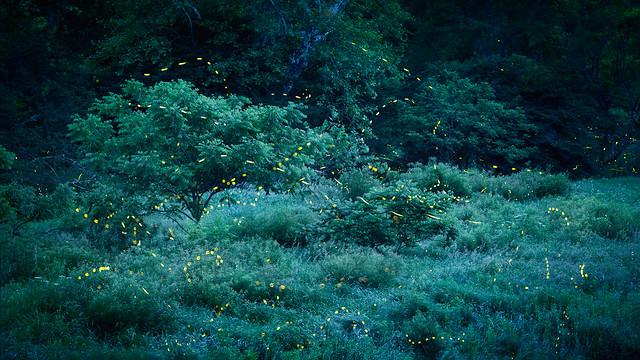 Fireflies July 1 Jason Gambone  2019-11