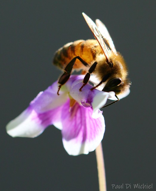 Backlit bee
