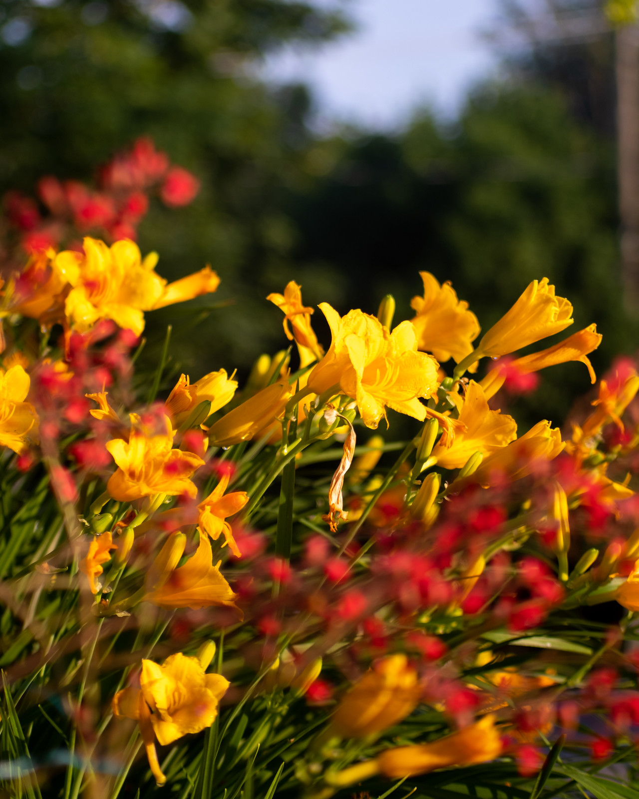 PGS_Lynns Garden_20190712-32.jpg