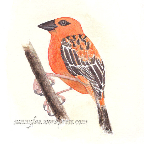 watercolour painting of a little red bird