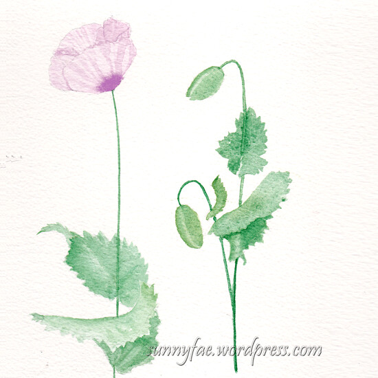 watercolour poppy & buds