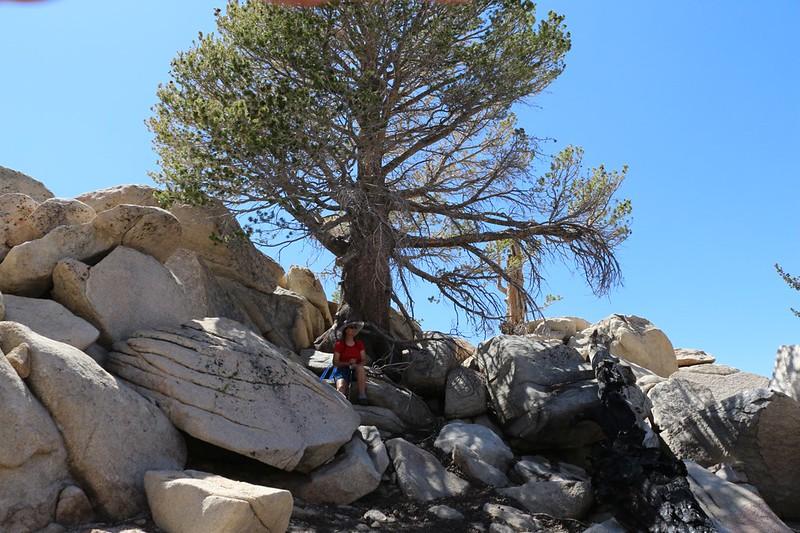 Vicki sitting in the shade of a pine tree just below the summit of Lake Peak