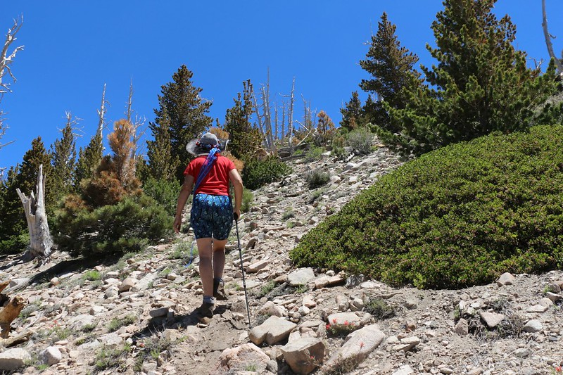 It's steep and rocky as we climb the use trail to Ten Thousand Foot Ridge (Peak 10094)