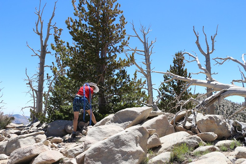 Vicki finds a wooden contraption on the summit of Fish Creek Peak (Peak 9942)