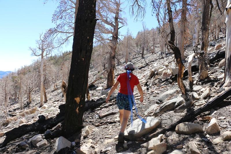 Heading east from Fish Creek Saddle, cross-country through burned terrain toward Fish Creek Peak