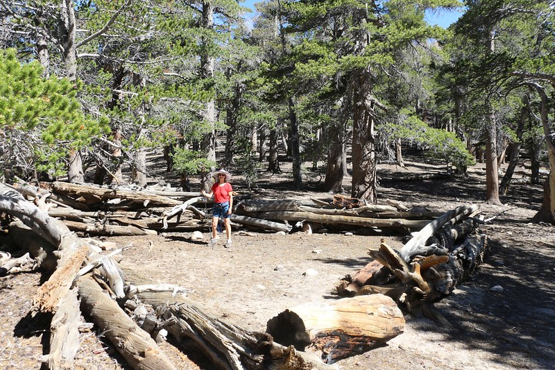 The campground at Fish Creek Saddle