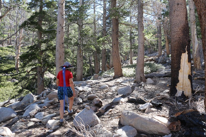 Hiking up the old trail to Fish Creek Saddle from the Lodgepole Campground