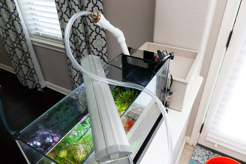 remove water from filter and pump section of Fluval Spec V aquarium for weekly maintenance