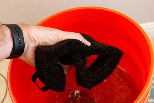 rinse Fluval Spec V sponge filter in old tank water