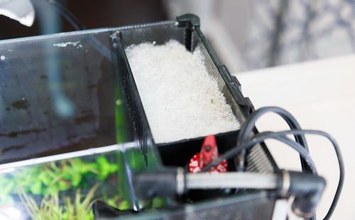 Poly filter floss in Fluval Spec V aquarium