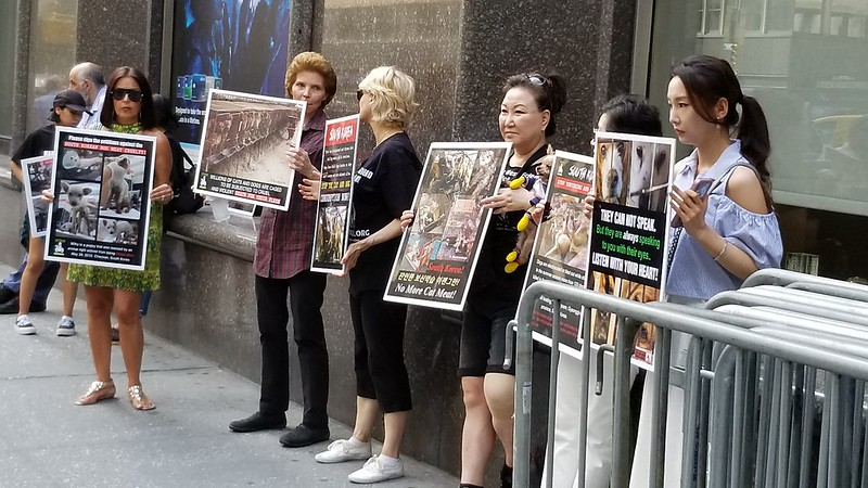 New York, South Korean Consulate General, 'Boknal' Demonstration for the South Korean Dogs and Cats (Day 1) – July 12, 2019 Organized by The Animals' Battalion