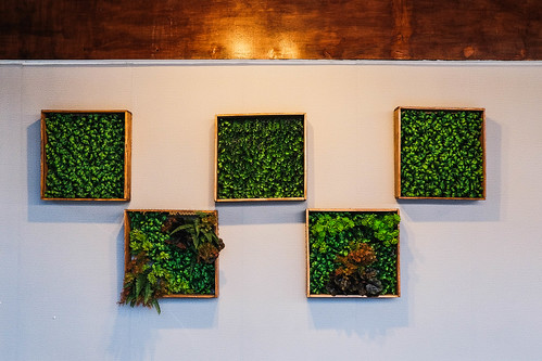 Symmetrical plant frames hanged on white wall | by wuestenigel