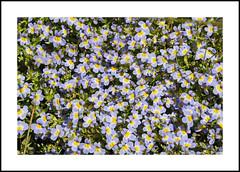 Corral Meadows Wildflowers