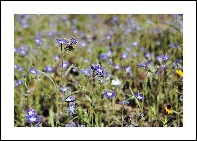 Hooker Meadow Wildflowers
