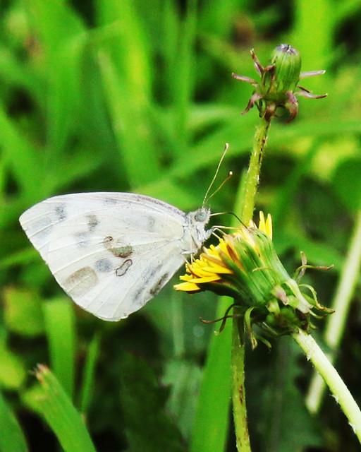Patterns in Nature (Macro Mondays) 07-14-19