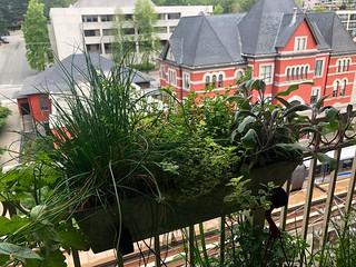 High Garden 2019