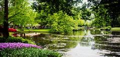 Carte postale du Jardin des Tulipes d'Amsterdam, Pays-Bas