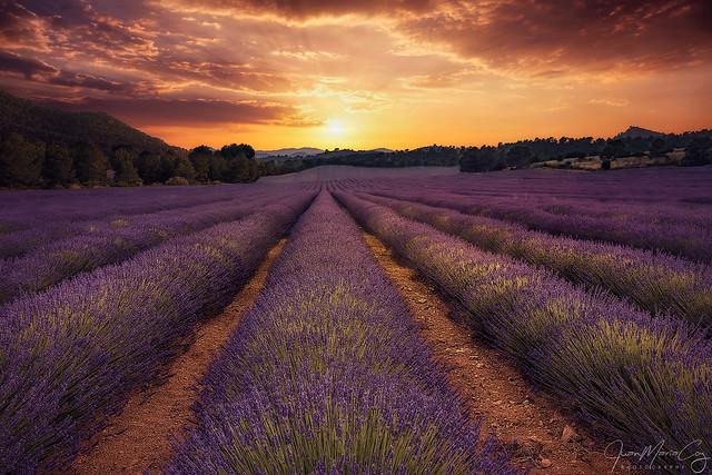 The last sun beams colouring the fields of Lavanda - Liétor (Albacete, Spain)